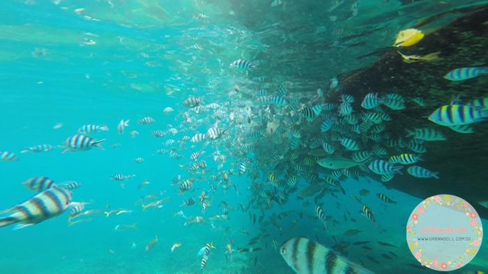 Tioman Snorkeling - 24
