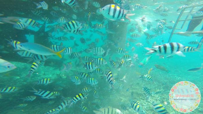 Tioman Snorkeling - 25