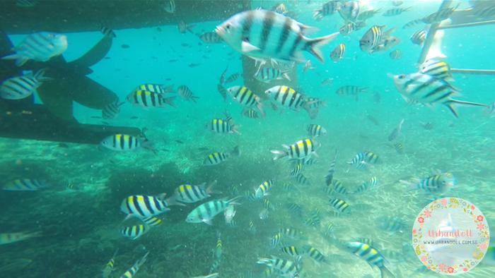 Tioman Snorkeling - 26